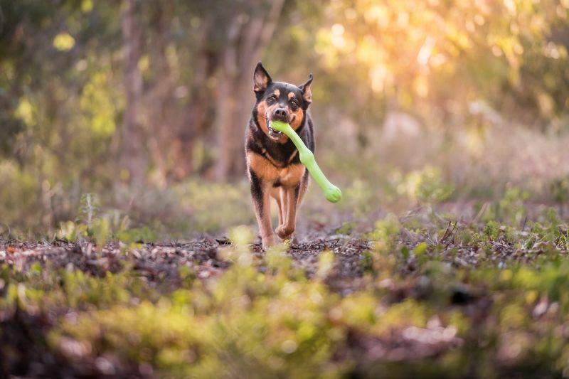 West Paw Zwig a kutya legjobb barátja